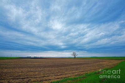 Photograph - Lone Tree And Big Sky North Dakota by David Arment