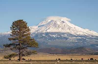 Photograph - Lone Tree And Mount Shasta by Loree Johnson