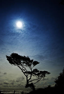 West Fork Photograph - Lone Tree And Ocean by Dale Stillman