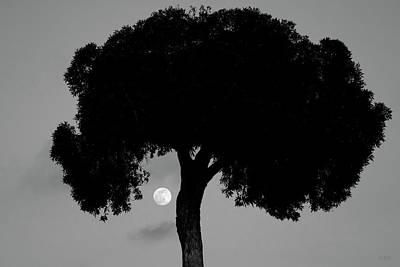 Photograph - Lone Tree And Rising Moon Bw by David Gordon