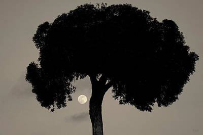 Brown Tones Photograph - Lone Tree And Rising Moon Toned by David Gordon