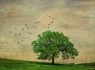 Photograph - Lone Tree by Anna Louise