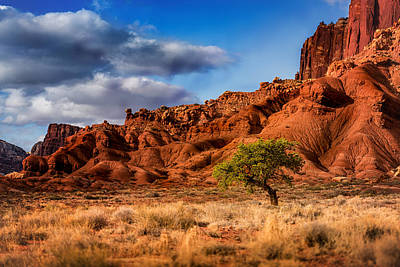 Photograph - Lone Tree At Capitol Reef by Dave Koch
