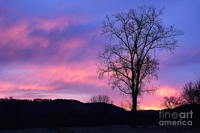 Photograph - Lone Tree At Dawn by Larry Ricker