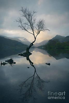 Llyn Padarn Photograph - Lone Tree At Llyn Padarn by Amanda Elwell
