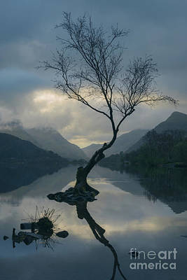Lone Tree At Llyn Padarn At Sunrise Art Print