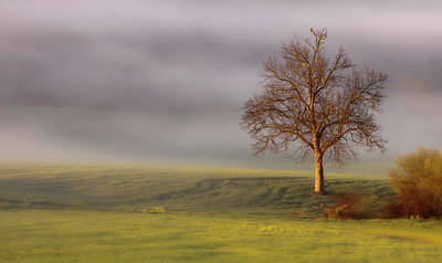 Photograph - Lone Tree At Ojai Summit by John A Rodriguez