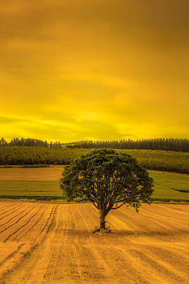 Photograph - Lone Tree At Sunset by Don Schwartz