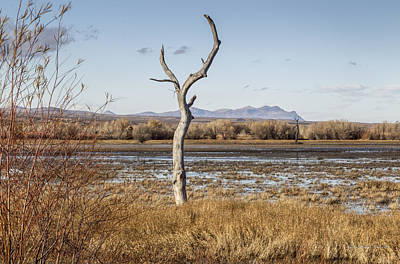 New Mexico Photograph - Lone Tree At The Bosque by Julie Basile