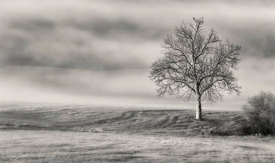 Photograph - Lone Tree At The Ojai Summit by John A Rodriguez