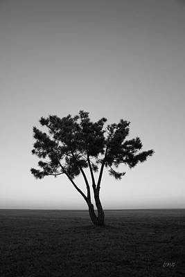 Photograph - Lone Tree At Twilight Bw by David Gordon