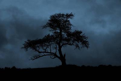 Lone Tree Blue Art Print