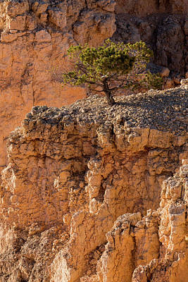 Photograph - Lone Tree, Bryce Canyon, Utah by David Stanley