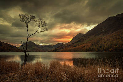 Lone Tree - Buttermere Art Print by Martin Williams