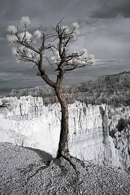Infrared Photograph - Lone Tree Canyon by Mike Irwin