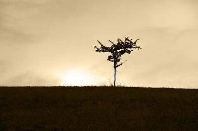 Photograph - Lone Tree by Chris Day
