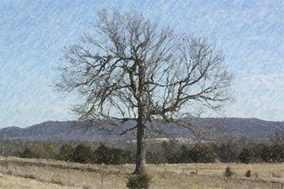 Photograph - Lone Tree by Donna G Smith