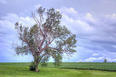 Photograph - Lone Tree - Farm - Morning by Nikolyn McDonald