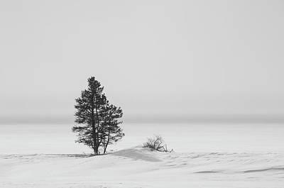 Photograph - Lone Tree by Gary Lengyel