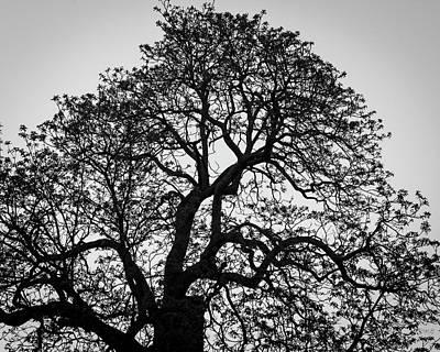 Photograph - Lone Tree Gloucester Ma Bw by David Gordon