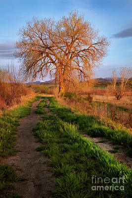 Photograph - Lone Tree Glowing In The Sunshine by Ronda Kimbrow