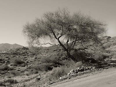 Art Print featuring the photograph Lone Tree by Gordon Beck