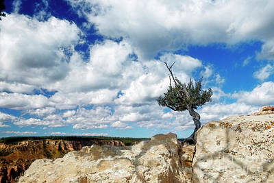 Food And Flowers Still Life Rights Managed Images - Lone Tree Hangs on at North Rim Royalty-Free Image by David Arment