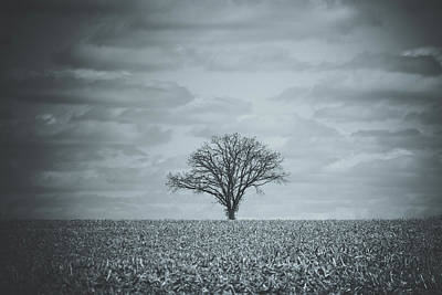 Photograph - Lone Tree In A Cornfield by Joni Eskridge