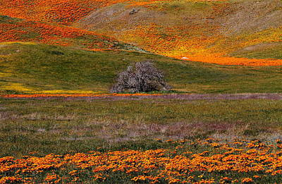 Nature Photograph - Lone Tree In A Sea Of Orange And Yellow by Jetson Nguyen