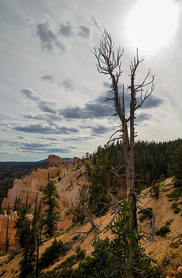 Photograph - Lone Tree In Bryce Canyon by Kathleen Scanlan