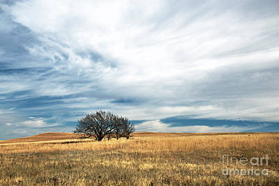 Photograph - Late Autumn In The Flint Hills by Jean Hutchison