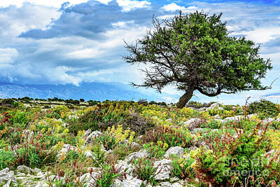 Photograph - Lone Tree In Rab Landscape by Global Light Photography - Nicole Leffer