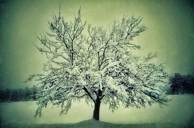 Photograph - Lone Tree In Snow 2 by Sarah Coppola