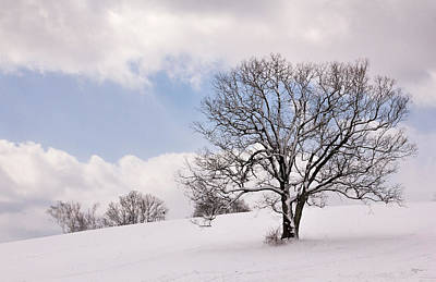 Photograph - Lone Tree In Snow by Betty Denise