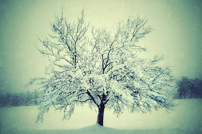 Photograph - Lone Tree In Snow by Sarah Coppola
