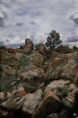 Photograph - Lone Tree In The Arizona Dells by Wayne King