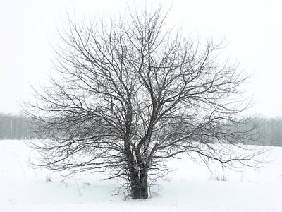 Photograph - Lone Tree In The Snow by David T Wilkinson