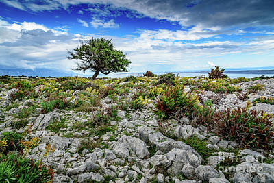 Photograph - Lone Tree In Windswept Rab Landscape by Global Light Photography - Nicole Leffer