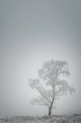 Photograph - Lone Tree In Winter by Andy Astbury