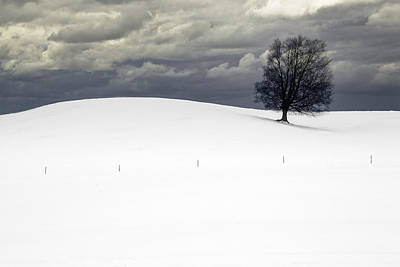 Photograph - Lone Tree In Winter On A Snow Covered Hill With Cloudy Sky by Randall Nyhof