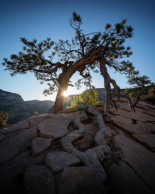 Tree Roots Photograph - Lone Tree In Zion National Park by James Udall