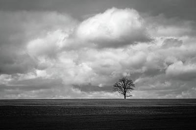 Photograph - Lone Tree by Joshua Hakin