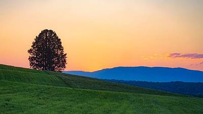 Photograph - Lone Tree by Kendall McKernon