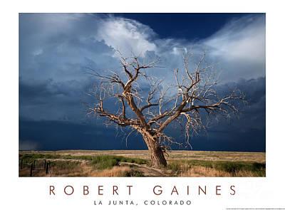 Photograph - Lone Tree, La Junta, Colorado by Robert Gaines