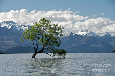 Photograph - Lone Tree. Lake Wanaka. New Zealand. by Yurix Sardinelly