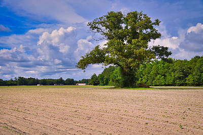 Photograph - Lone Tree by Linda Brown