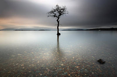 Lone Tree Loch Lomond Art Print
