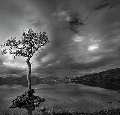Photograph - Lone Tree Loch Lomond Scotland by Alex Saunders