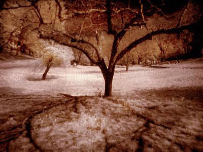 Lone Tree Art Print by Michael Cleere
