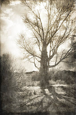 Lone Tree Art Print